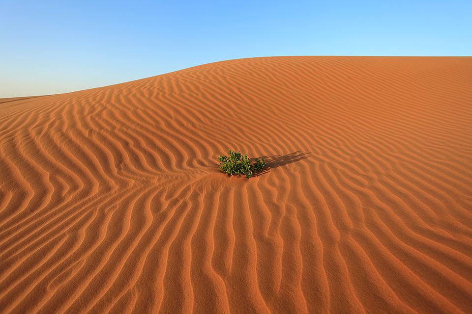 沙丘上的生命